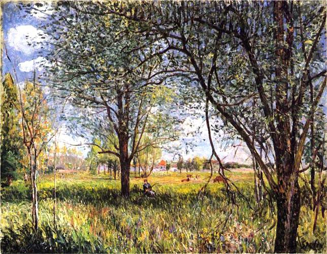 Ивы в поле, день