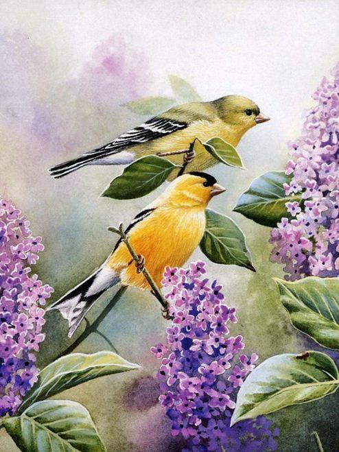 Птицы Сьюзан Бордет